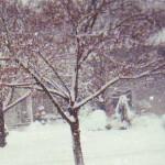 Edited snowstorm jan 2014